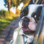 15 hundprylar som du och din hund förtjänar
