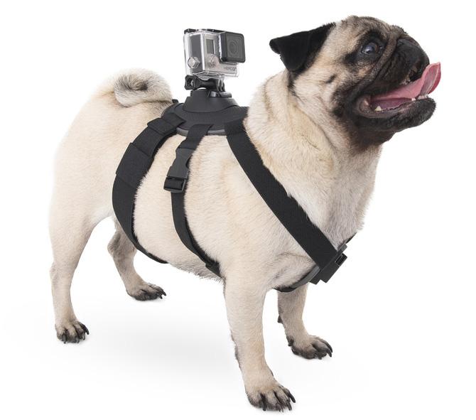 Hundsele för actionkamera - geekblogg.se